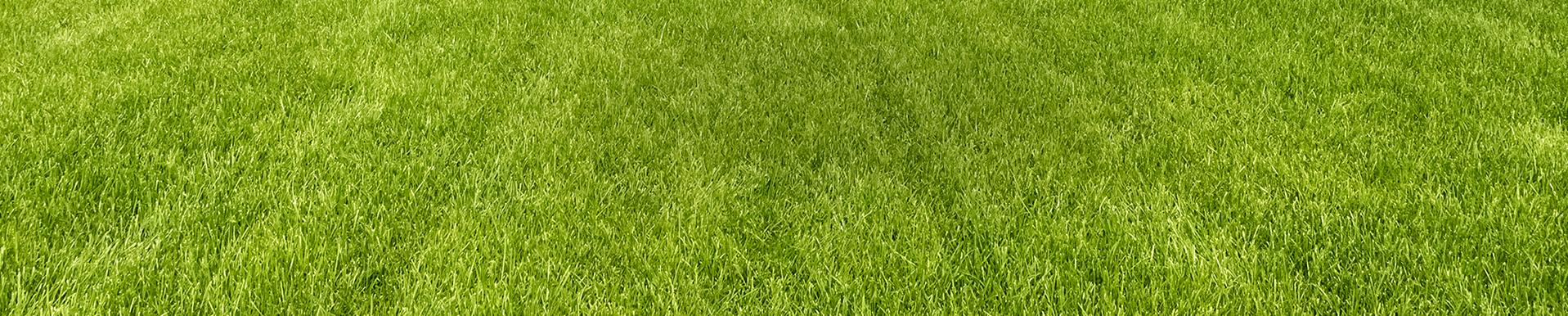 Robofarma  Dostarczamy zaawansowane technologie do pielęgnacji trawników oraz utrzymania czystości w zbiornikach wodnych. Sprawdź ofertę na nowoczesne roboty koszące Ambrogio oraz roboty basenowe NEMH.