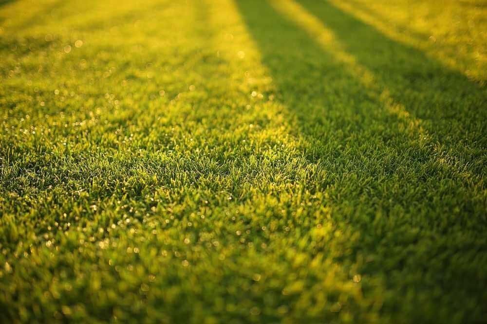 mulczowanie trawnik