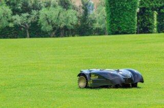 trawnik zrobotem dokoszenia trawy